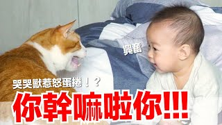 【小貓奴養成記EP14】蕾夢要被貓咪揍啦!哭哭獸惹怒蛋捲!?