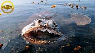 10 สัตว์โลกใต้มหาสมุทรที่อันตรายที่สุดในโลก (ระวังด้วยนะ!!)