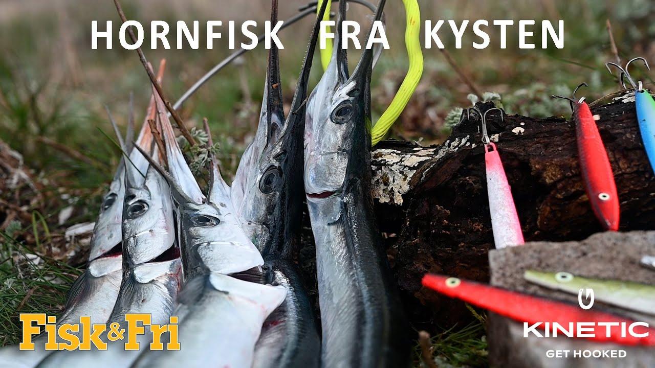 NY VIDEO: SÅDAN FANGER DU HORNFISK