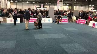 WORLD DOG SHOW 2017 Cadebou Female Junior