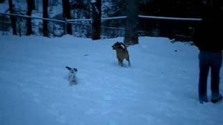 dapper dan budaj and snow
