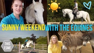 Vlog   Sunny Weekend With The Equines   Gridwork + Dressage   This Esme