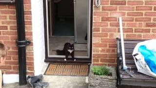 Cats go outside for the first time in a cat safe garden