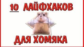 10 ЛАЙФХАКОВ ДЛЯ ЗДОРОВЬЯ ХОМЯКА // ЗДОРОВЫЙ ХОМЯК // ХОМЯЧОК // ХОМКИ // ХОМЯЧКА // АЛИСА ИЗИ