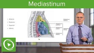 Mediastinum: Lungs, mediastinum and cardiac valves – Anatomy | Lecturio