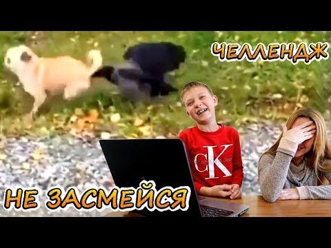 , title : 'НЕ ЗАСМЕЙСЯ ЧеЛлЕнДж 😁 Смешные дети и животные! Подборка приколов 2019 №1 🤣'