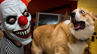 FUNNY Dogs Scared of Halloween Compilation