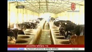 juboraj cow bd - Free video search site - Findclip Net