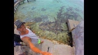 Мальдивы 2018, акулий остров Рихивели, плаваем с огромными акулами и скатами, крабьи бега