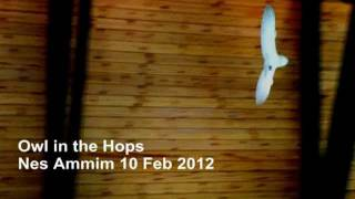 preview picture of video 'Owl in the Hops Nes Ammim 10 Feb 2012'