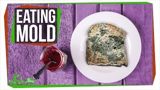What Happens If You Eat Mold? - Video Youtube