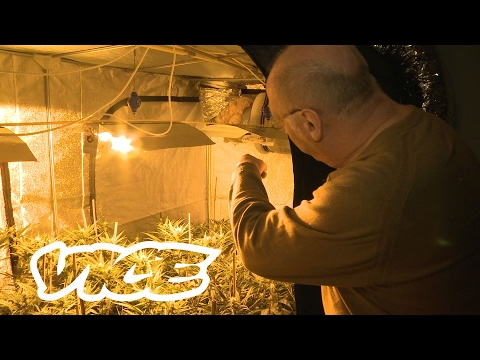 SpeesCees, de koning van de cannabis: VICE Meets