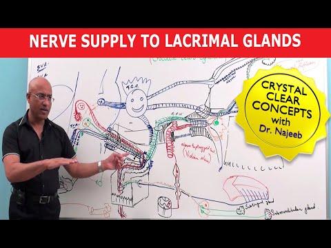 Nerve supply to Lacrimal Glands – Neuroanatomy