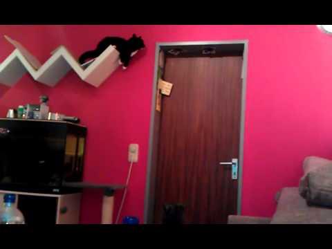 Katze will Magnet vom T�rrahmen haben XD
