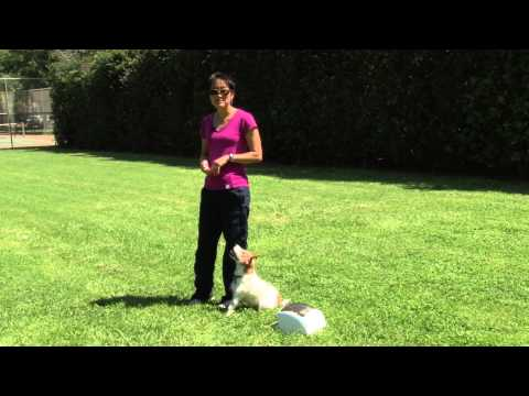 Using the Treat & Train for Obedience: Heeling Exercises