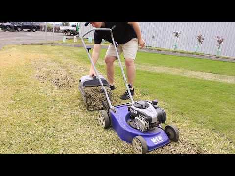 Dethatching Your Lawn - Lawn Solutions Australia