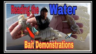 ZLF Fishing for white Steenbras! How to bait, rig up and read the water for white Steenbras!