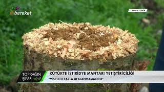 Toprağın Şifası - Kütükte İstiridye Mantarı Yetiştiriciliği / Kullanılan Talaşın Özellikleri