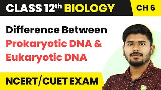 Difference Between Prokaryotic DNA and Eukaryotic DNA - Molecular Basis of Inheritance | Class 12