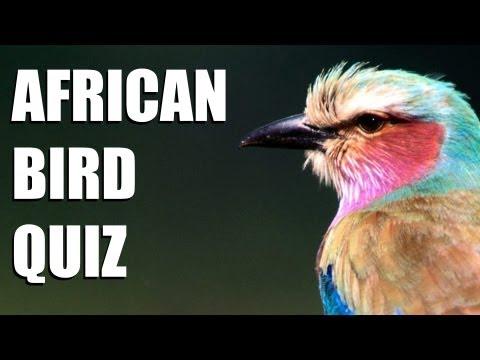 African bird quiz