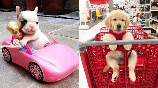 Baby Dogs - Cute and Funny Dog Videos Compilation #4 | Aww Animals