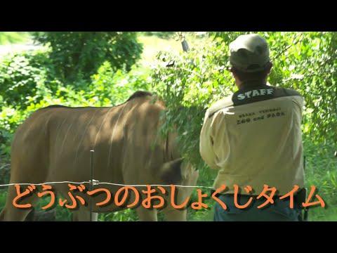 天王寺動物園動物園2