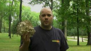 Hen of the Woods / Maitake Mushrooms