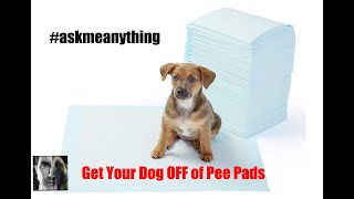 How to Get a Dog OFF of Pee Pads - ask me anything - Dog Training Video