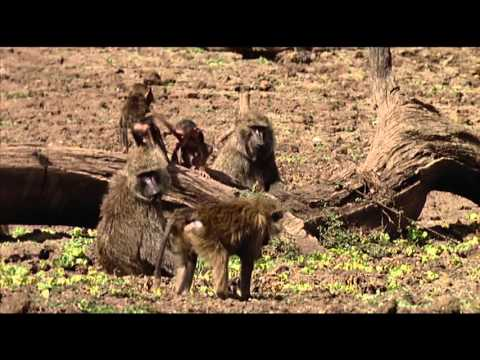 Animals like us : Animal Play - Documentary