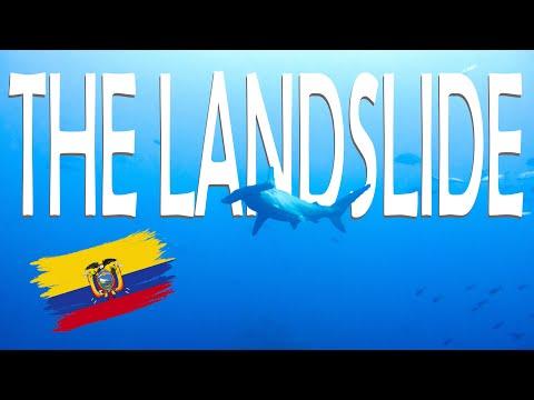 Scalloped Hammerhead in Ecuador