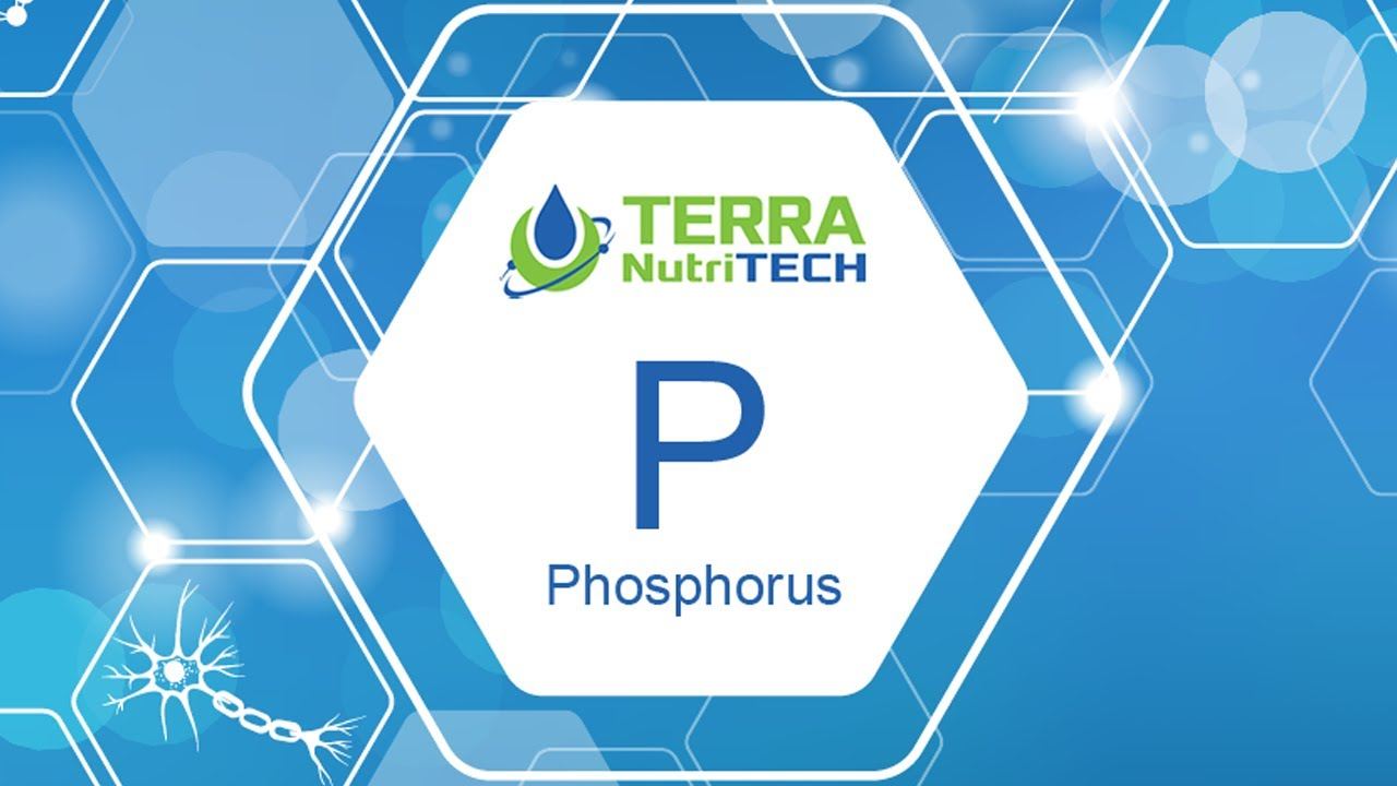 Why is Phosphorous an Important Mineral to Balance with Calcium?