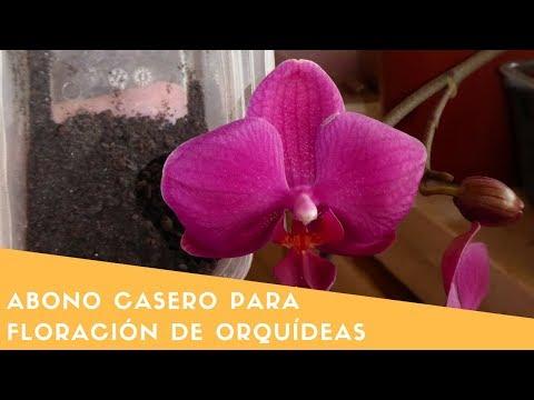 Abono casero para la Floración de Orquídeas alto en potasio || Orquiplanet