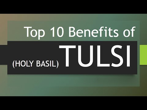 Video Top 10 Benefits of Tulsi - Amazing Health Benefits of Holy Basil - Holy Basil (Tulsi)