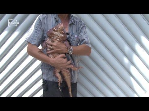 Animais silvestres são apreendidos em Diadema - Diário do Grande ABC
