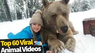 Top 60 Cute and Funny Animal Videos | Top Viral Animal Videos