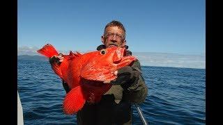 Как ловить морского окуня на тонком мысу