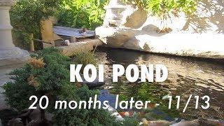 Koi Pond Update 20 Months After Construction | Mandarin Ducks & Turtles