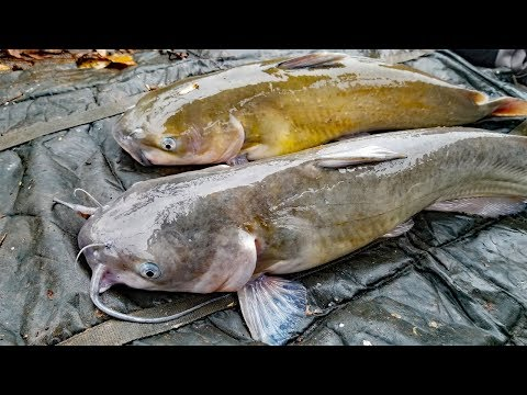 How to Find Catfish in Winter – Best Fishing Tips to Catch More Catfish