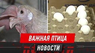 Алматинские птицефабрики на грани банкротства, утверждают руководители