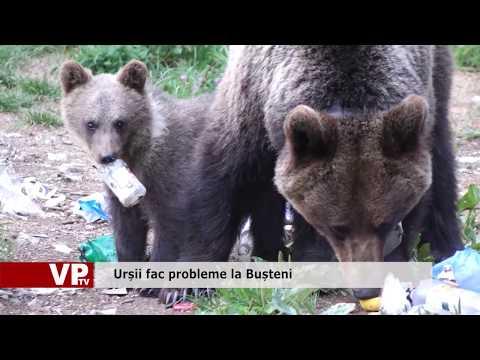 Urșii fac probleme la Bușteni