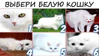 Тест покажет ТВОЁ состояние и подскажет ЧТО ДЕЛАТЬ! Просто выбери белую кошку! Психология!