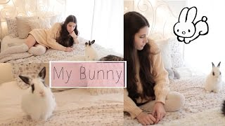 My Bunny Lucy | Things You Should Know Before Getting A Rabbit