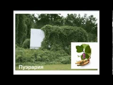 Программа лечения гепатита с в москве государственной программы