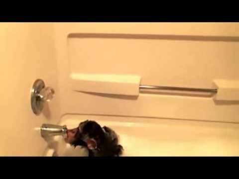 Monkey See, Monkey Take a Bath!