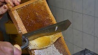 Juni- Bienenmonat der Superlative