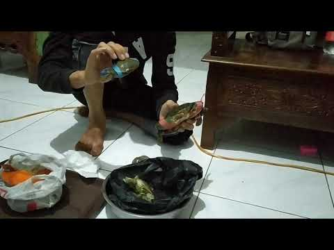 Makan kepiting lezat dlu boss ku😁