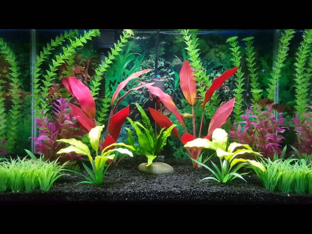 20 Gallon High Aquarium Update! Betta Community Tank.