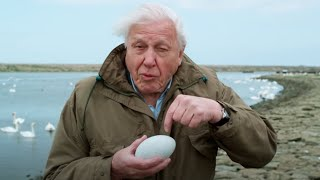 Nature's First Line of Defence | Attenborough's Wonder of Eggs | BBC Earth