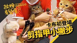 ►拉姆有幾噗◄ 貓咪剪指甲小技巧大公開┃How to cut your cat's nails? ♤
