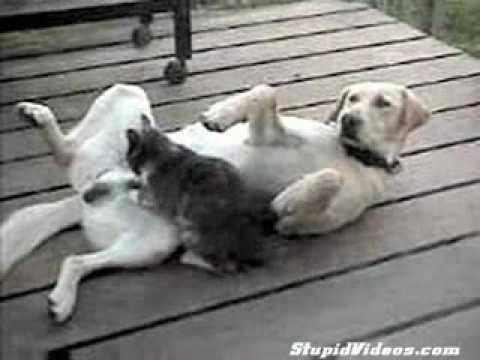 Reguli de câine prostatită cronică